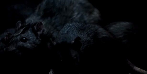 """""""A rat, when he bites you, he twists""""."""