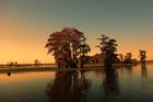 Bayou and cypress trees near Henderson, Louisiana. Photo / 123RF