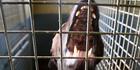 Councils need to act against dangerous dogs. Photo / John Borren