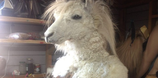 This taxidermy unicorn is still up for grabs until Monday. Photo/ Trade Me