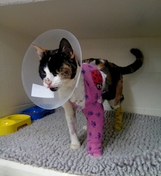 Sparkles had to have skin grafts on her burned leg. Photo /supplied