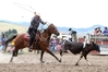 Ryan Harris Hayes attempts to lasso a small cow. Photo / Duncan Brown