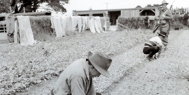 Japanese prisoners of war (above) gardening at Featherston Camp under the watch of a NZ Army guard, dated 1943-1945.