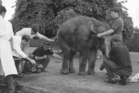 X-raying Bimbo the elephant, Colin Mildon, Ian McQuarrie, sole charge in the hospital's X-Ray Department at the time and vet Frank Beckett (in white shirt). The three other men were the circus elephant handlers. Photo / Dannevirke Evening News