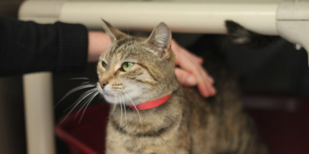 Flora is a gentle cat looking for a home.