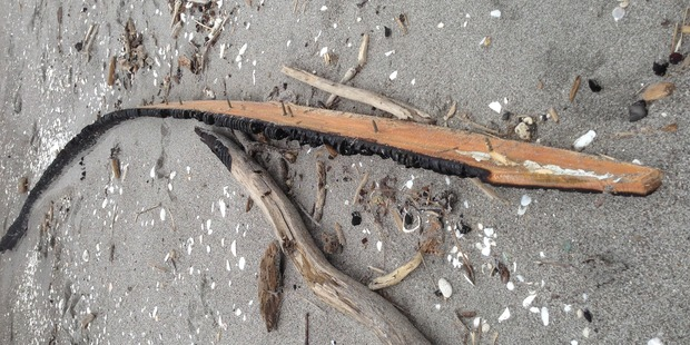 A piece of the wreckage of Pee Jay V that sunk of the coast of Whakatane after setting on fire