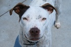 Lady is an affectionate dog and a quick learner.