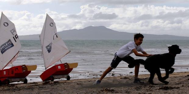 Joe Pettigrew, 11, of Mairangi Bay plays with dog Hector on Mairangi Bay beach as the nice weather starts to turn on Monday morning. Photo / Nick Reed