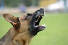Is you KiwiSaver fund a dog? Photo/Thinkstock.