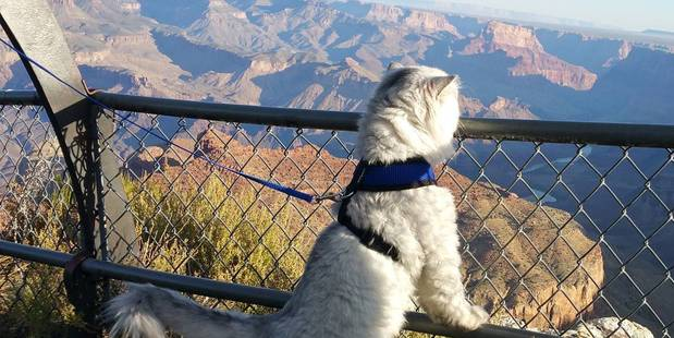 "Gandalf's visit to the Grand Canyon was ""too much for his little kitty mind to comprehend"". Photo / Instagram, ganddygram"