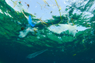 At least 8 million tonnes of plastic already ends up in the ocean every year. Photo / iStock