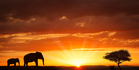 Africa is calling, but booking accommodation is not simple. Picture / iStock