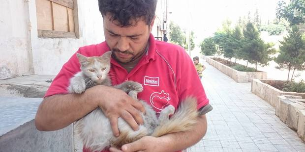 Mohammad has rescued more than 100 cats. Photo / Facebook / Cats of Syria
