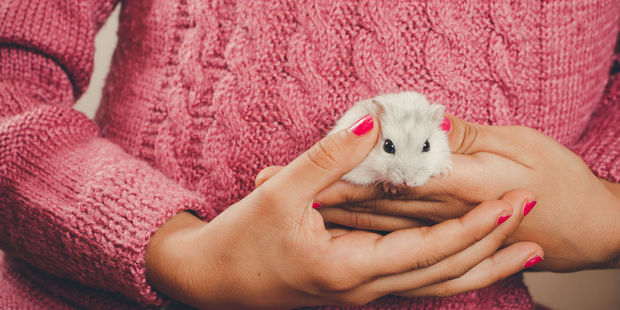A guest at a hotel in Newport asked whether they could check in with their pet hamster. Photo / 123RF