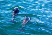 Apparently innocent-minded individuals will see dolphins in the optical illusion below. Photo / 123rf.com