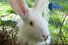 Ronda is a friendly rabbit looking for a home.