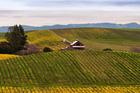 Vineyards in Napa Valley. Photo / Bob McClenahan