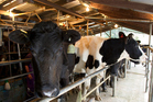 Rabobank sees an improved outlook for dairy prices.