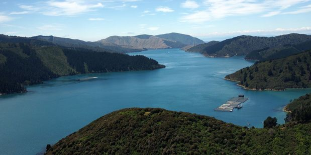A tramper spent a cold, wet night in the Marlborough Sounds bush after being disorientated. Photo / File