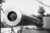 War service: Togo, the cat mascot of the battleship HMS Dreadnought. Reporter: Christine McKay  Photographer: Supplied  DANNEVIRKE NEWS  NEWS