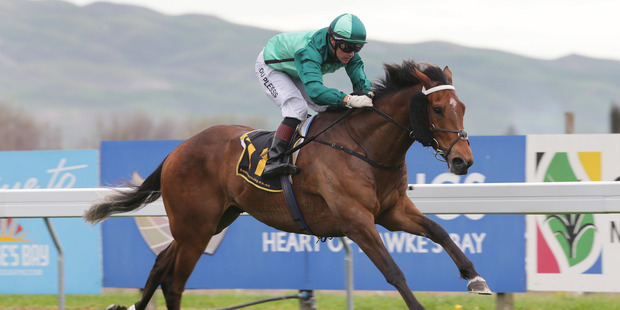 Humidor will be chasing his third win at Hastings from as many stars in the Livamol Classic.
