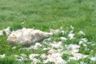 A dog killed two sheep on a farm on the northern outskirts of Dargaville on Thursday.