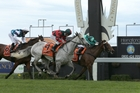 Willie Cazals (outside) gets up to beat Humidor in yesterday's Livamol Classic at Hastings. Photo / Trish Dunell