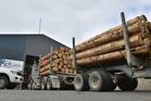 Logging trucks queue up outside company C3's drive-through yard in Dunedin, for wood volume measurement. Photo: Gregor Richardson.