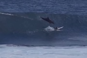 The dolphin was headed directly for Jed Gradisen and his board, luckily the teen rolled out of the way just in time.