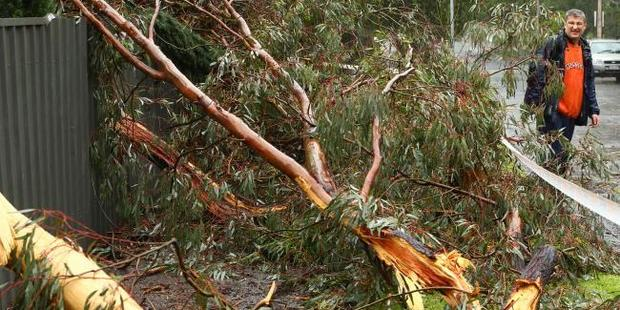 Lightning strikes a tree outside Gary Altman's home in Myrtle Bank, Adelaide. Photo / Tait Schmaal, News Corp Australia