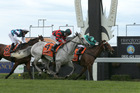 Willie Cazals (outer) cuffs Humidor to win the 2016 Livamol Classic at Hastings on Saturday. Hasselhoof ran third. Photo / Trish Dunell
