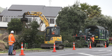 GOING DOWN: A row of pohutukawa trees being chopped down to make room for a roundabout on Papamoa Beach Rd. PHOTO/JOHN BORREN
