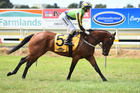 Saracino will be ridden by Damien Oliver. Photo / Race Images