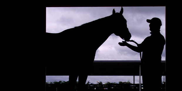 Sacred Elixir's trainer Tony Pike. Photo / Richard Robinson