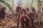 Source: YouTube: TakePart. Palm oil, the ubiquitous ingredient in scores of food and cosmetics products, is responsible for the destruction of rainforests home to orangutans, tigers, and other endangered wildlife.
