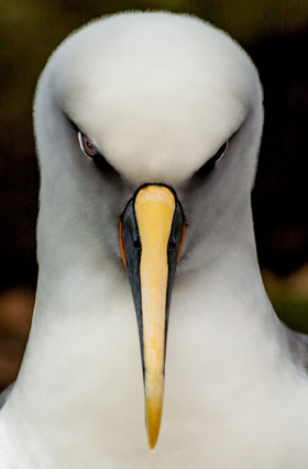 Close-up with a southern Buller's albatross, and winner of the Our Work category. Photo / Rob Murdoch