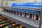 One of Compac's fruit sorting machines in action. Photo / supplied.