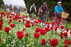 COLOURFUL: People enjoyed a ride through stunning tulips, despite wet weather, for Frocks on Bikes yesterday. PHOTO/STEPHEN PARKER