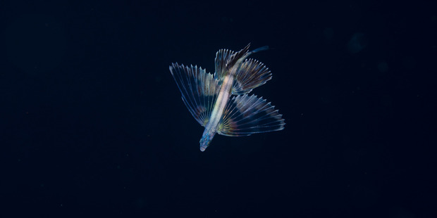 A  flying fish jumps out of the water at the Poor Knights Islands, this image won the overall prize. Photo /  Crispin Middleton