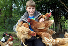 Coby Chambers saves his pocket money to rescue battery hens. Photo / Stuart Munro