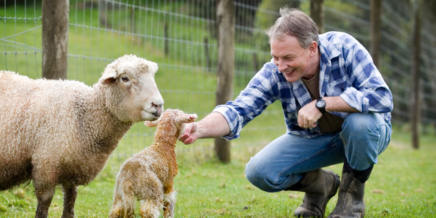 Phil Goff has a closer look to one of his newly born lambs. Photo / Natalie Slade