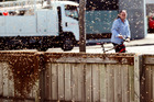 Swarmed: 8000 bees took up residence on a fence outside Snap Fitness in Hastings this afternoon. Photo/Warren Buckland.