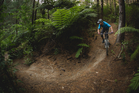 Waitangi Mountain Bike Park will open on Sunday with more than 20km of forest trails, due to expand to 75km within two years. PHOTO / SUPPLIED