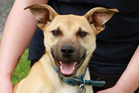 Thunder is a sweet, active dog looking for a home.