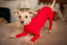 The doggy leotard. Genius or cruel? Photo / Heather Smith, SWNS.com