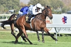 Honey Rider could kick off a lucrative few weeks for her trainers at Ellerslie on Saturday. Photo / NZ Racing Desk