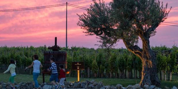 Visitors will be able to access the wine fountain any time the winery is open and by appointment only on weekends. Photo / Facebook, Dora Sarcese