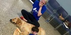 Autistic boy Kainoa Niehaus meets service dog Tornado thanks to 4 Paws For Ability. Photo / 4 Paws For Ability Facebook