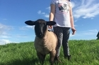 A pet lamb has died after it was repeatedly kicked by a youth while tied to a fence unable to escape, with its injuries likened to being hit by a car or shot with a rifle.