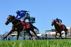Glamour mare Winz could face a sterner test than expected in the Cox Plate tomorrow. Picture / Getty Images